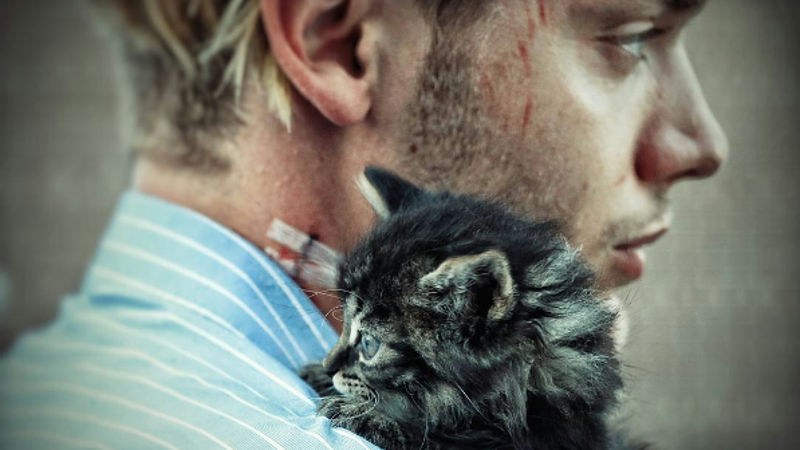 Shadowhunters - BREAKING NEWS! Domberto Adopted The Cutest Kittens In The World! - Thumb